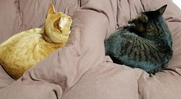 猫に好かれる