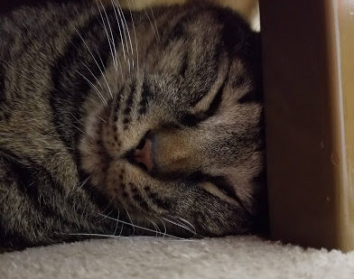 ひじき「ゆっくり寝たいにゃ」