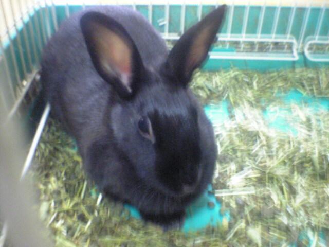 昔飼っていたウサギ「だんごちゃん」