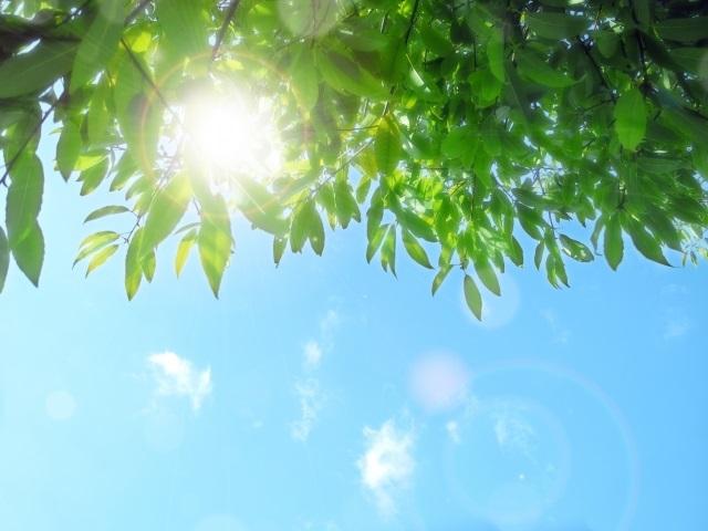 太陽光 バイオレットライト