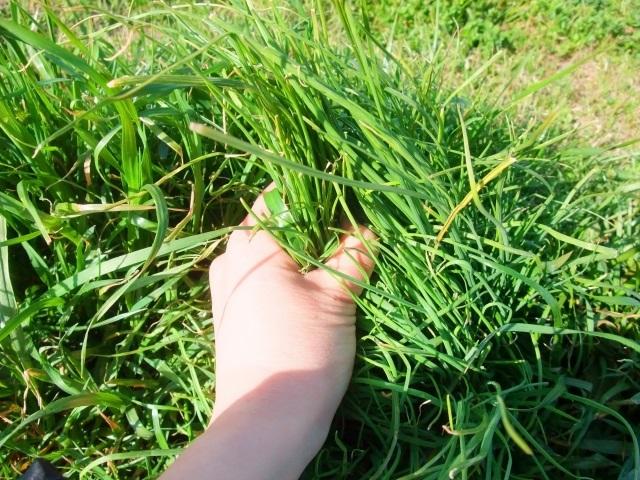 草むしりのタイミング