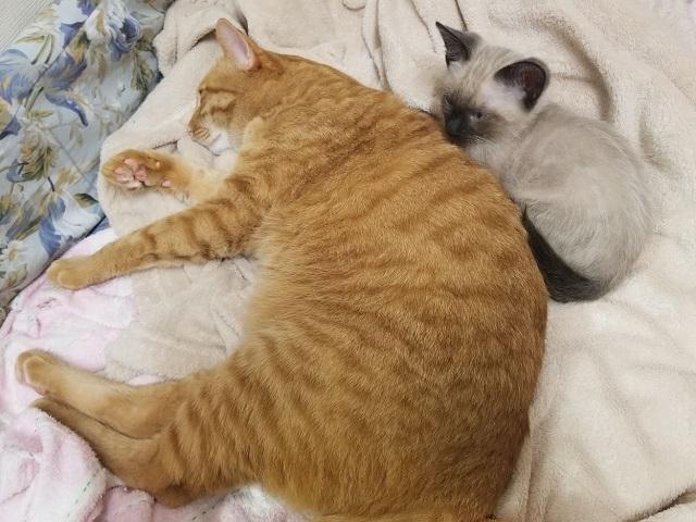 トラとシオ