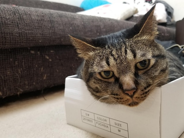ご満足な猫