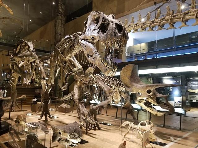 恐竜の化石レプリカ