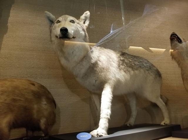 オオカミさん