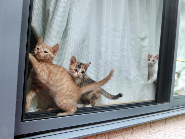 後追いする子猫