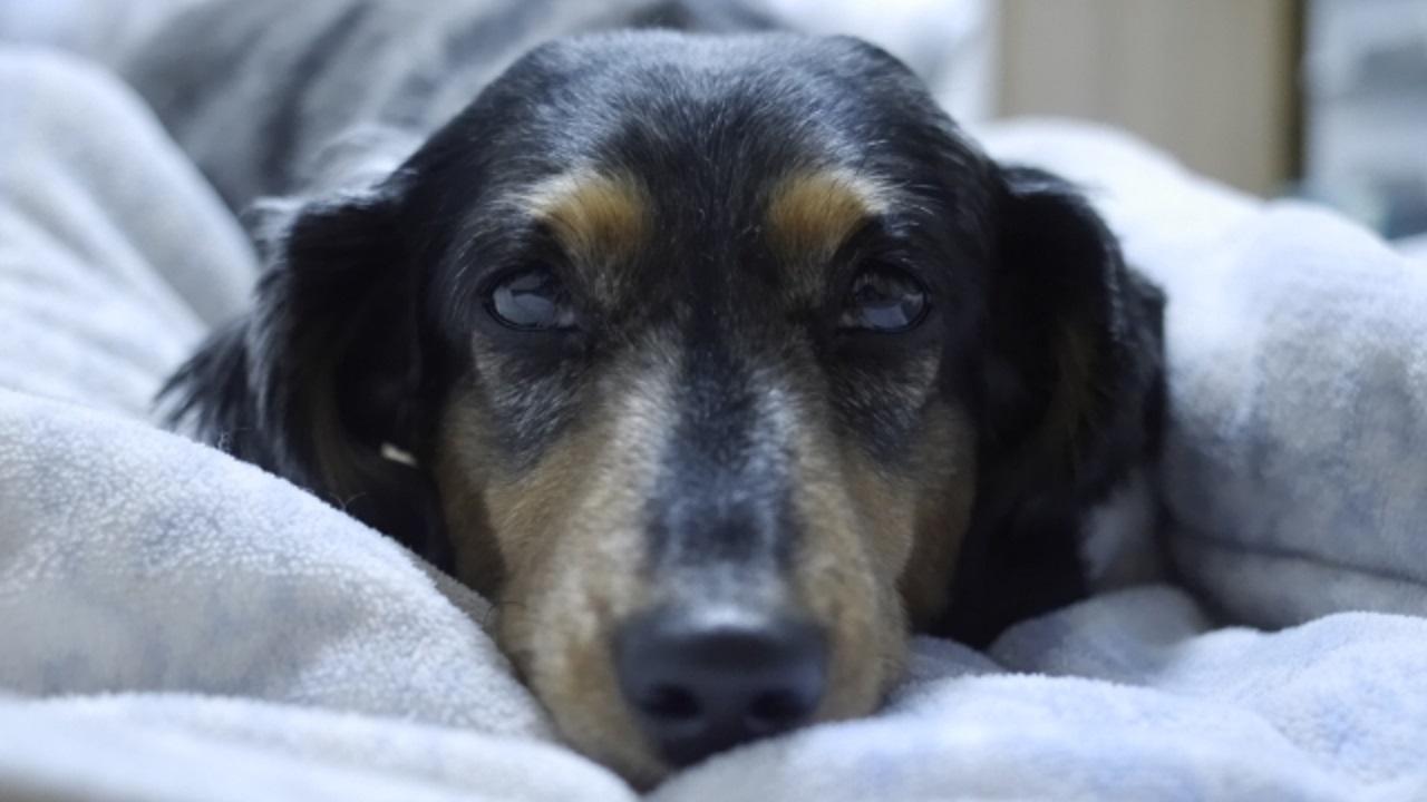 愛犬の老化