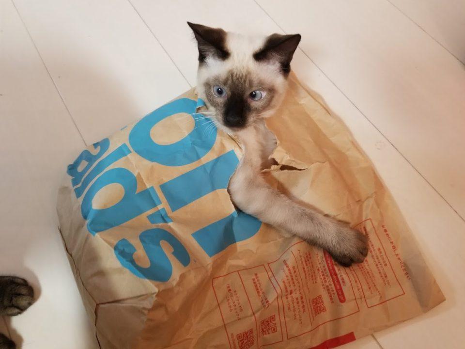マックの袋で遊ぶ猫