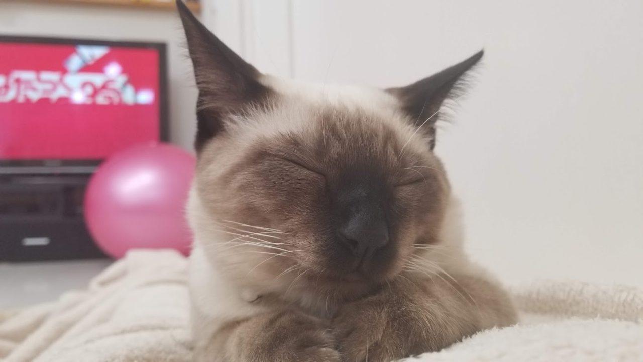 ちょっと太った猫