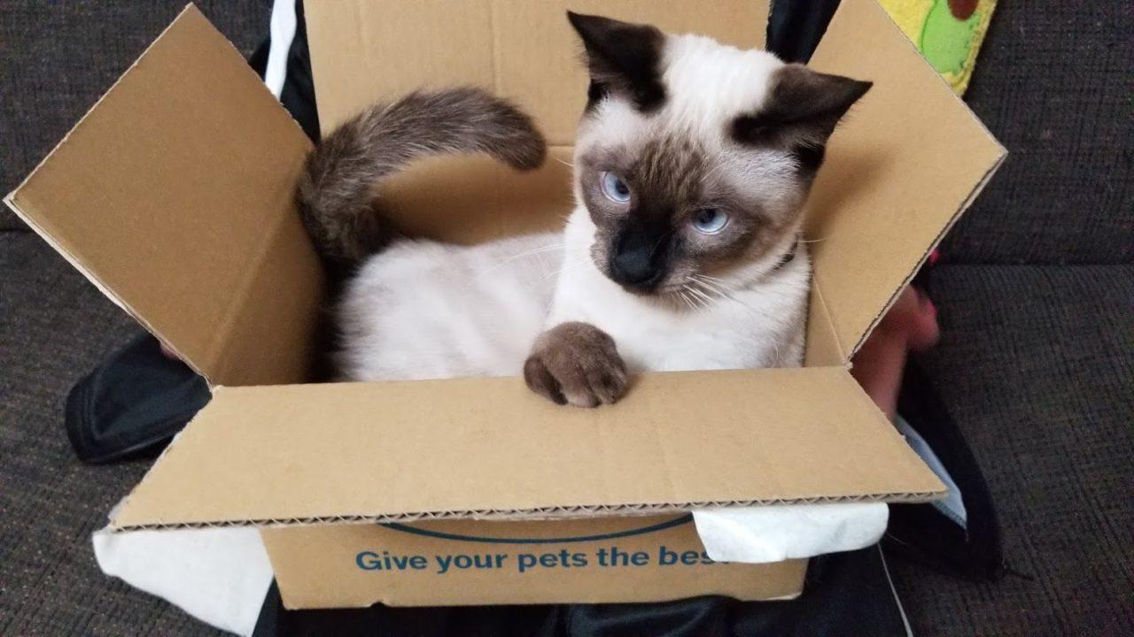 隙あらば箱に入る猫