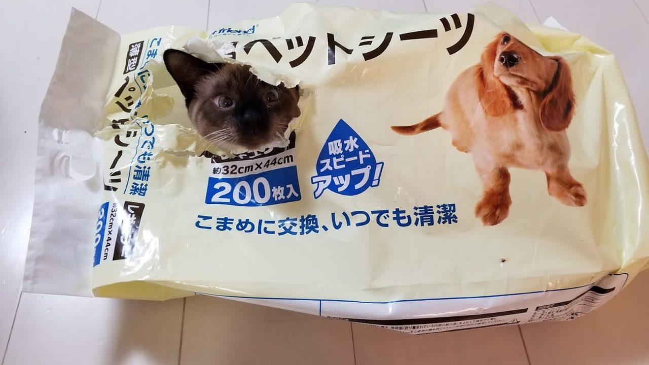 顔が黒くなった猫