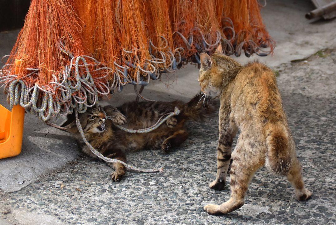 猫の喧嘩 イメージ
