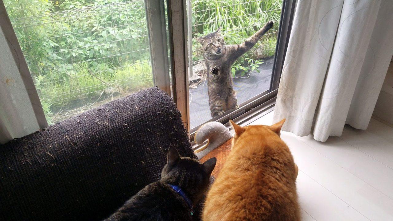 威嚇中の猫