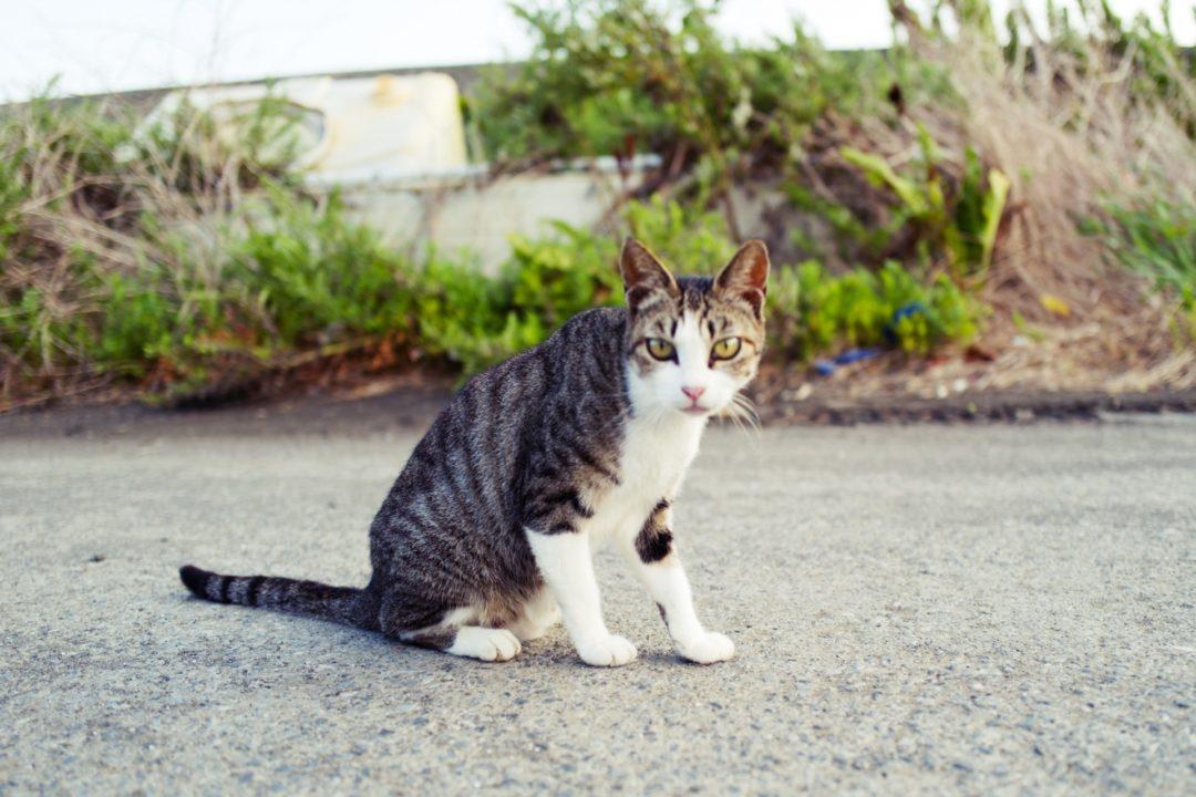 地域猫イメージ